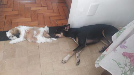 Pepe e Pandora cochilando
